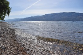 'Heroes' haul dying swimmer to shore in Peachland